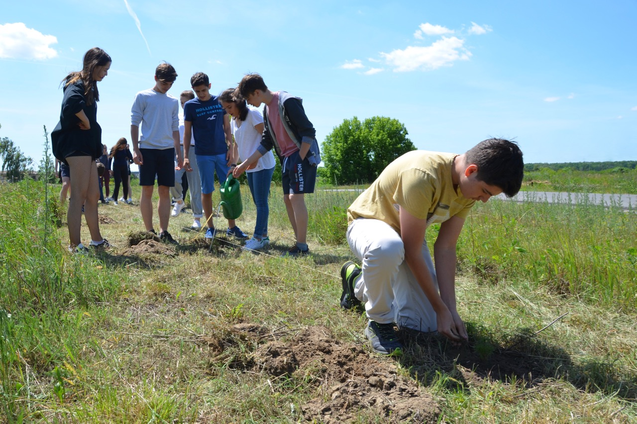 Planting trees for cleaner air news posts for Pollution fighting plants